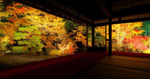 昼間の京都とは違った美しさを持つ夜の京都はまるで別世界!嵐山・清水寺・永観堂といった紅葉観光名所が幻想的な雰囲気に包まれる。開催期間が限られているので、お目当ての紅葉スポットを探して狙い撃ちがおすすめ!