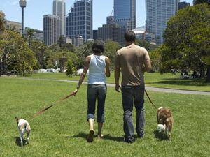 Training People for the Walk | Cesar Millan