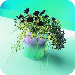 Vlechten van takken Agapanthus voor het maken van een bloemstuk met soorten dahlia, cosmos atrosanguineus,...