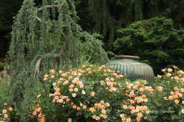 32 best My Moon garden idea\'s images on Pinterest | Moon garden ...