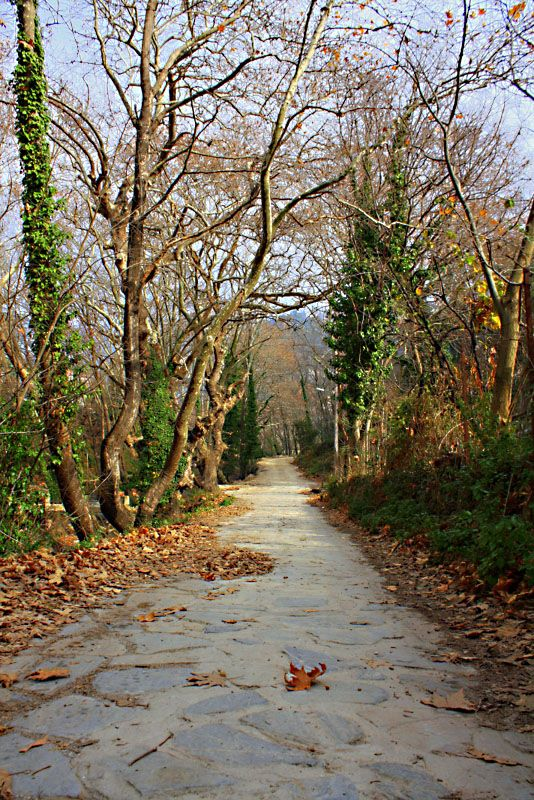 Autumn in Volos, Magnisia, Thessaly_ Greece