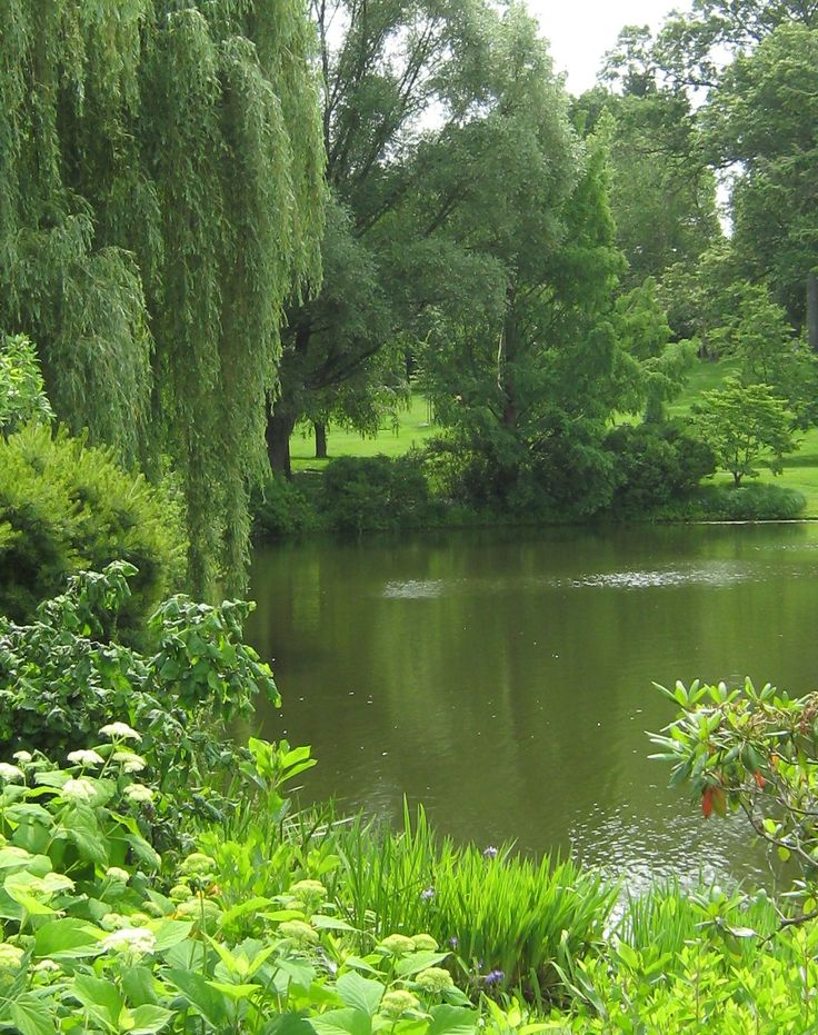 73 Pond Images Let You Dream Of A Beautiful Garden: 12 Best Images About Big Ponds On Pinterest