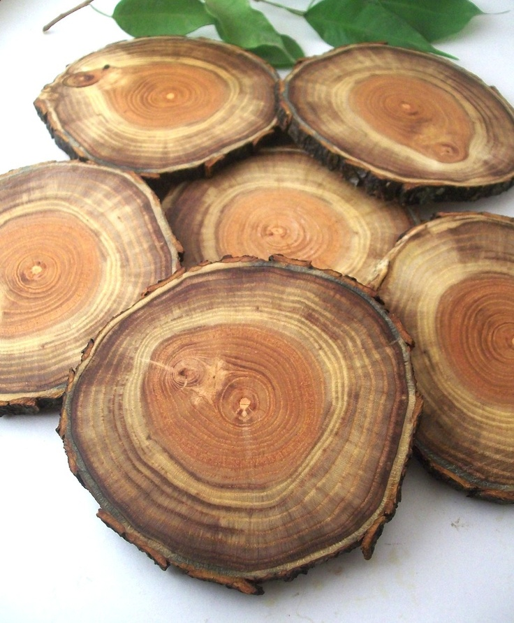 Oak Wood Branches ~ Best images about wooden slices on pinterest creative