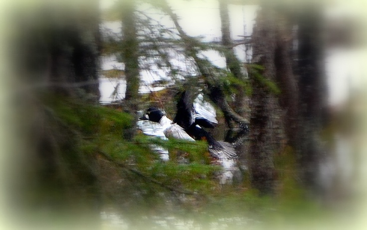 Telkkä lentää pitkin puron vartta.