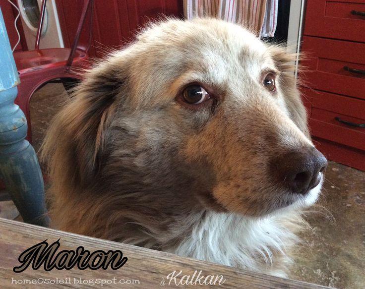Janvier ´17_ Maron (Kalkan, Turquie)