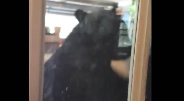 A Seminole County man chased a massive bear out of his garage Then stands up against our pop up camper. Ha ha ha. Always exciting to see them.