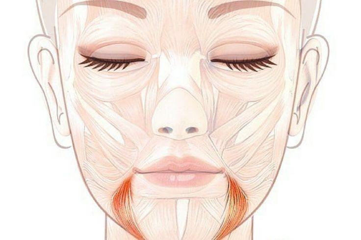 """Поднимаем уголки губ """"Упражнение Улыбка"""": за опущенные уголки губ, которые придают лицу унылое выражение, отвечает мышца, опускающая угол рта. Иначе еще её называют «мышца презрения». Эта треугольная по форме мышца, начинаясь от боковой поверхности нижней челюсти, вплетается в круговую мышцу рта и при напряжении оттягивает уголок рта книзу."""