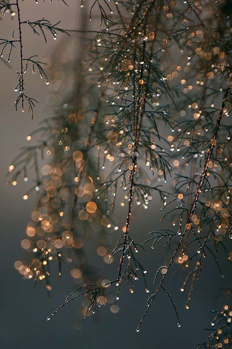 """.....the dewdrops cling to the branches and the sun makes them diamonds at dawn....""      ( from Sweet Ballyvaughan by Judi Mc Keown )"