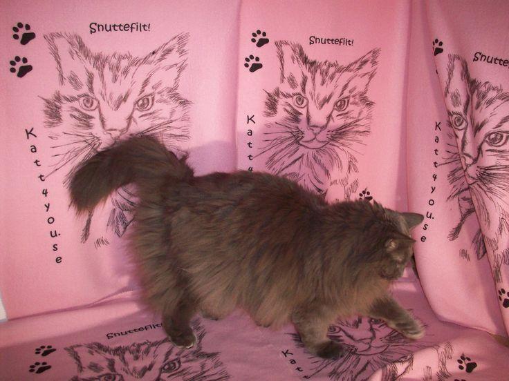 Bamse kollar in vår nyhet, den goa mysiga kattfilten. Rosa här och finns i många fler färger 99 kr/st på www.katt4you.se