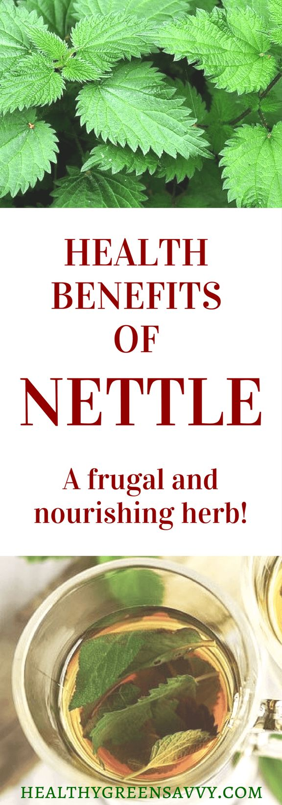 Nettle leaf tea offers some impressive health benefits! Click to find out more or pin to save for later. | nettle recipes | nettle leaf tea | nettle health benefits
