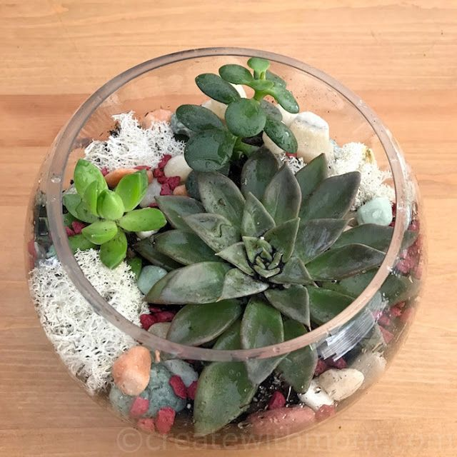 How to build a Terrarium #DIY #homedecor #craft #gardening #DIYgarden