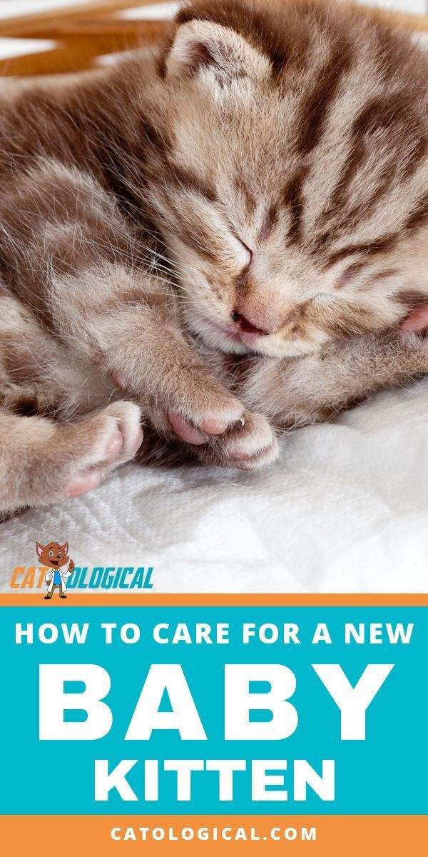 Tips And Tricks On How To Care For A New Baby Kitten In Your House If You Just Got A Cat Or Are About To Bring One I Baby Kittens Kitten