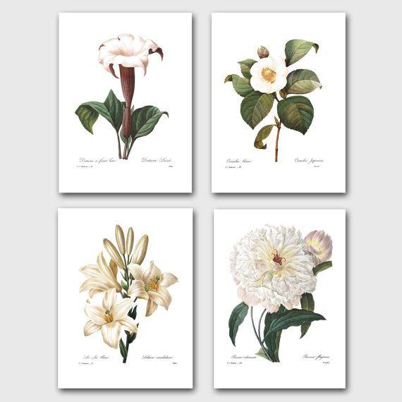 Arte de la pared de flor blanca, conjunto de 4 grabados botánicos (Redoute francés Home Decor)---trompeta de Ángel, camelia, peonía, lirio