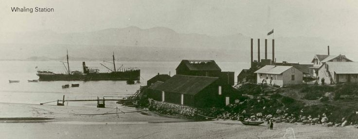 Way back when the Beacon Island was a Whaling station