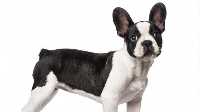 The Shortest And Longest Living Dog Breeds In The World Dog