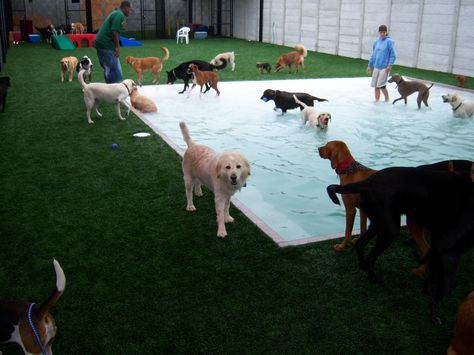 EasyTurf is great for all types of pet use from the traditional to shelters. www.easyturf.com l artificial grass l dog l pet l design l dog grass l fake grass