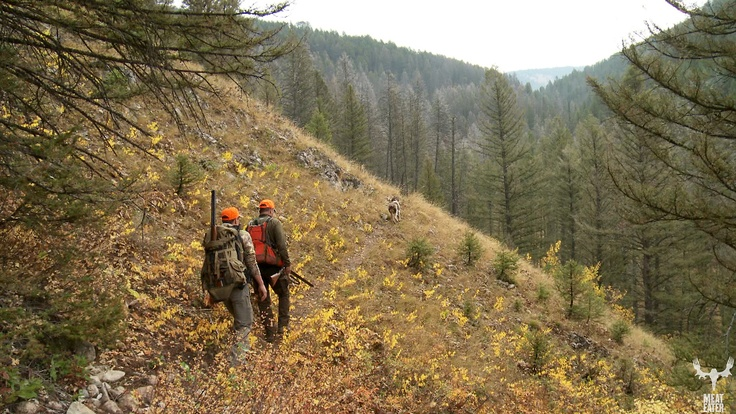 Montana Mountain Grouse hunt.