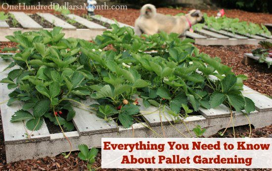 17 best images about gardening on pinterest raised beds for What to grow in a pallet garden