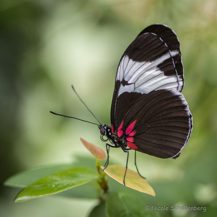 aus dem Schmetterlingshaus im Maximilianpark Hamm by Nicole Sch. on 500px