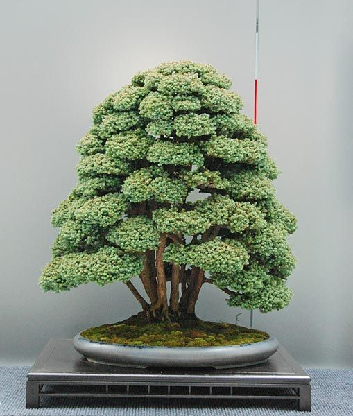 É impressionante o que nasce da argila verde e de sementinhas.