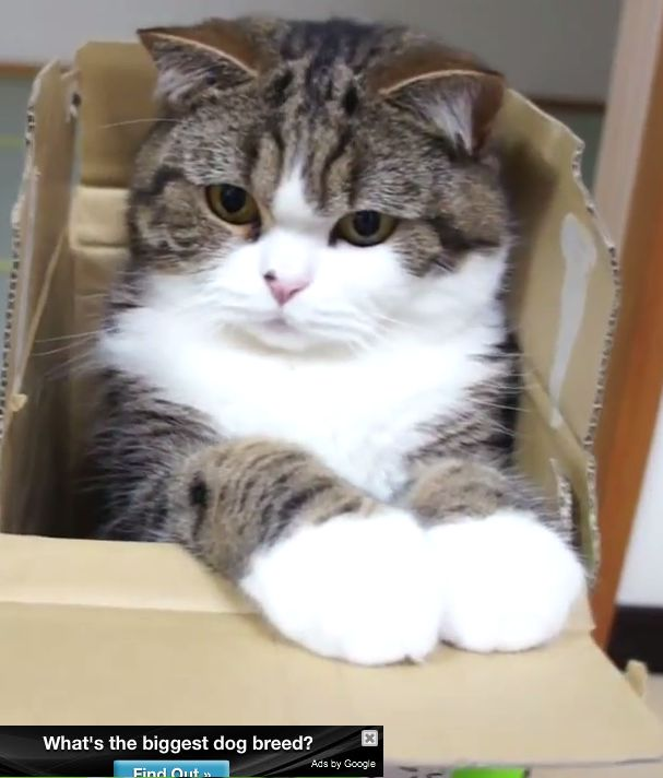 """""""A cat is more intelligent than people believe and can be taught any crime."""" --Mark Twain"""
