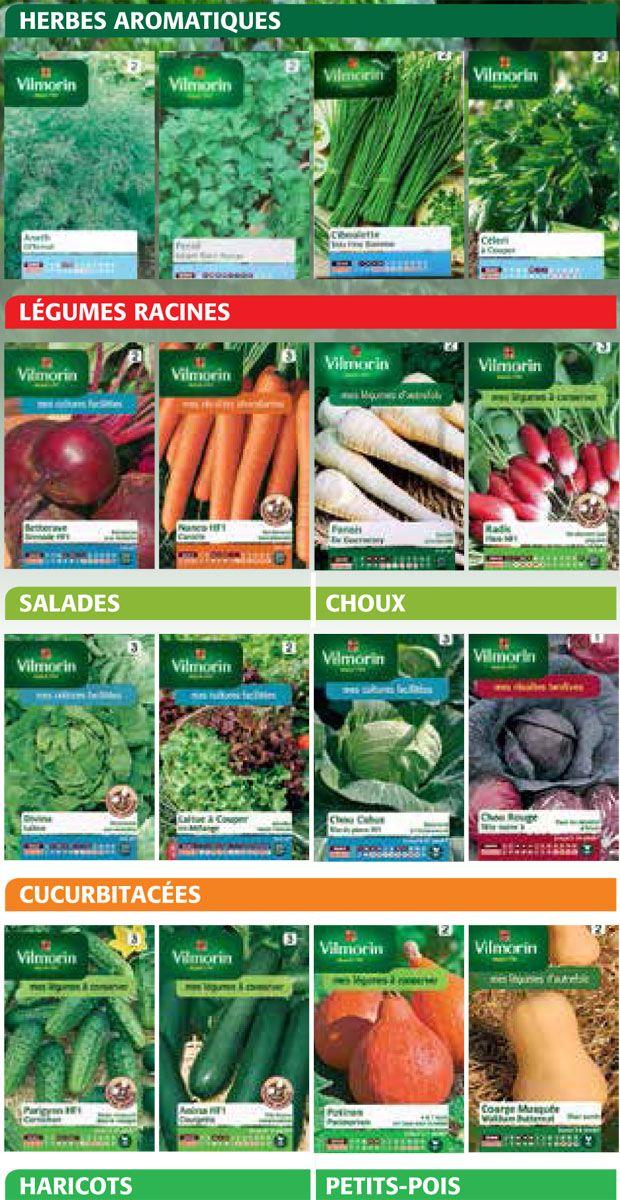 les meilleures associations de légumes dans un potager pour diminuer les insectes et maladies et augmenter les rendements