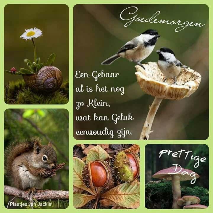 Citaten Voor Goedemorgen : Beste ideeën over herfst citaten op pinterest giving
