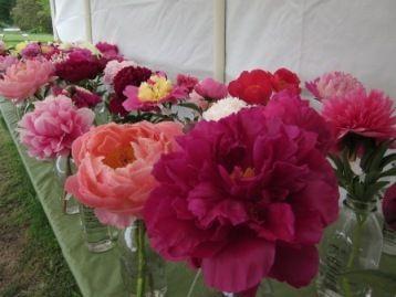 Brooks Gardens Peony & Iris Farm, Brooks, OR - Farm will be open during the May/June 2012 peony bloom season. Online here: http://www.brooksgardens.com