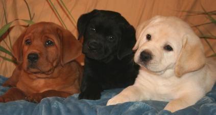 Could easily be rocky,zeke,maya as babies :)