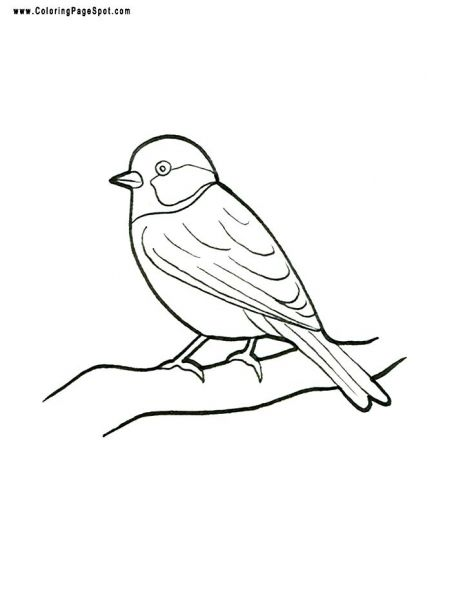 Bird Coloring Page Finch