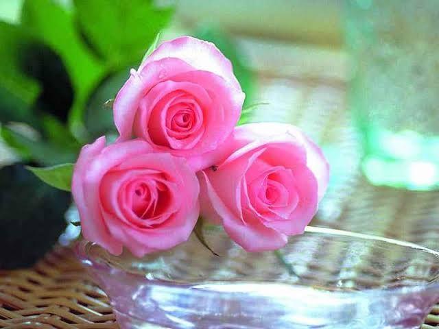 بوكيهات ورد فرح بوكيه ورد عروسة بوكيهات ورد جميلة ورد احمر شيك Beautiful Pink Roses Birthday Flowers Bouquet Rose Wallpaper