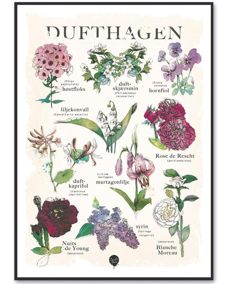 Mens vi venter på at det virkelig blir tid for hage kan vi la oss inspirere, f eks av denne herlige plakaten signert @lovedalesstudio #levvakkert #dufthagen #hageliv #inspiration #uterom #hage #minoase #flowers #blomster #blomsterhage