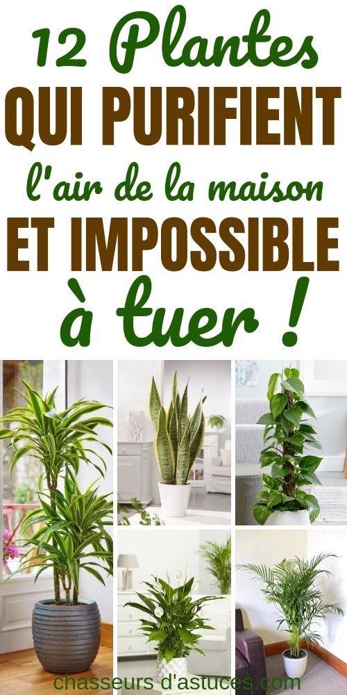 12 plantes d'intérieur (difficiles à tuer) pour air purifier l'air de votre maison