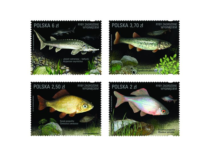COLLECTORZPEDIA Fish Threatened with Extinction