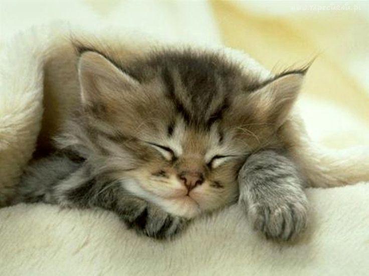 Śpiący, Puszysty, Kotek