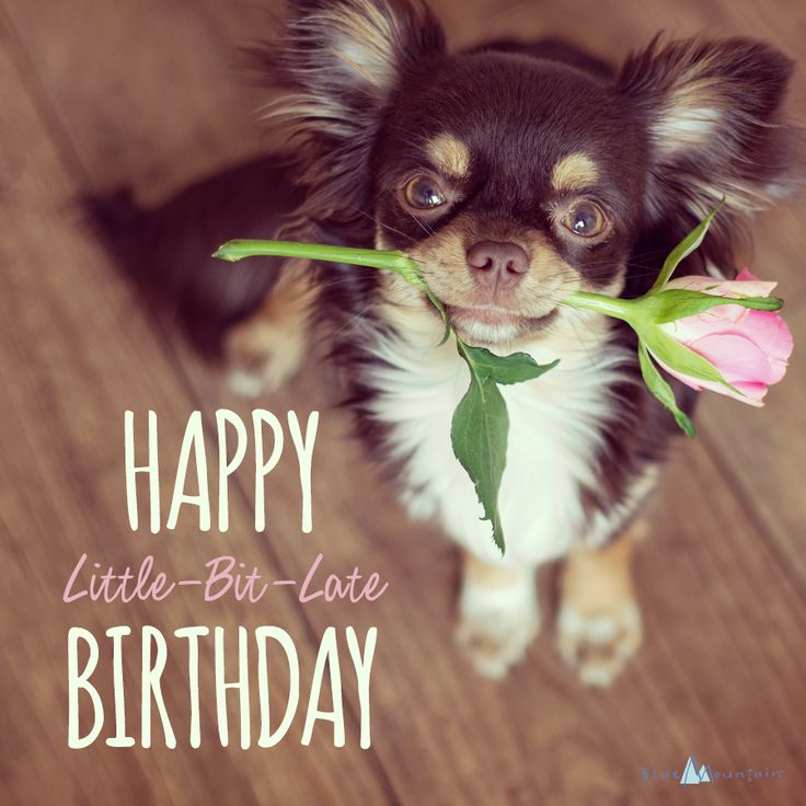 Belated Birthday Wishes - Blue Mountain Blog