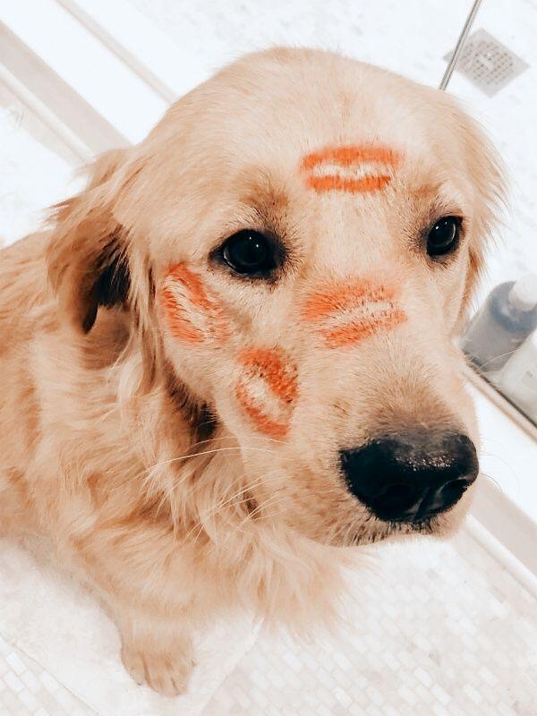 𝚙𝚒𝚗𝚝𝚎𝚛𝚎𝚜𝚝 𝚋𝚎𝚕𝚕𝚊𝚏𝚑𝚒𝚍𝚊𝚕𝚐𝚘 In 2020 Cute Baby Animals Cute Animals Dog Mom