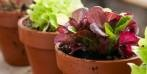 12 fertilizzanti e pesticidi biologici fai-da-te contro i parassiti del giardino