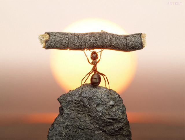 These ants know how to WORK IT! Get it! Woo. Macro photography is freaking great. [Artist's Site   via Geekologie]