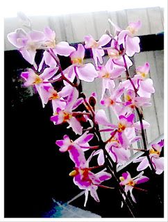 Secret Tips for Fast-Growing Orchid