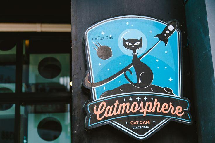Catmosphere - das Katzencafe in Chiang Mai, Thailand mit vielen süßen Kuschelkatzen.
