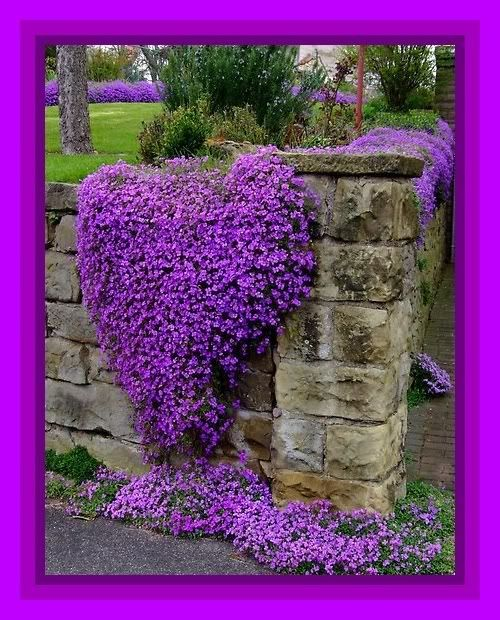 "Spring arrives cloaked in vivid color, as Mother Nature resurrects. None inspire more than her purple hues. We're reminded (as in classic film ""The Color Purple"") to remember to pause and appreciate the renewal of life that so gloriously surrounds us at Easter time!"
