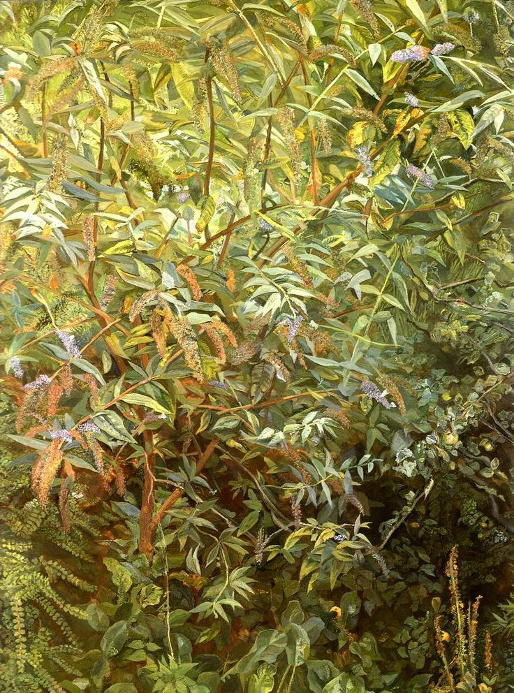 Garden, Notting Hill Gate - Lucian Freud