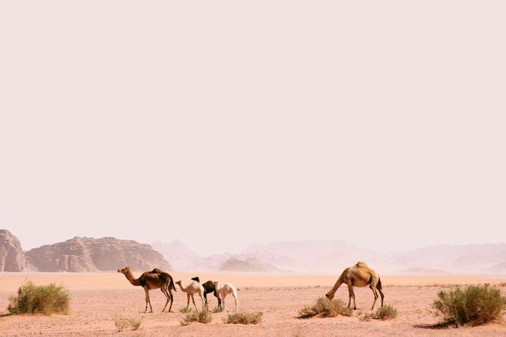 Camelus by Ante Badzim - Photo 211162675 / 500px