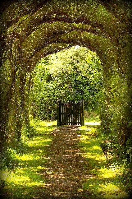 bluepueblo: Tree Tunnel Gate, Wales photo via claudia