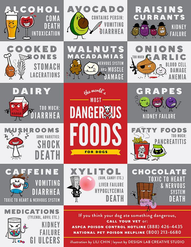 Human Foods that are dangerous for dogs.