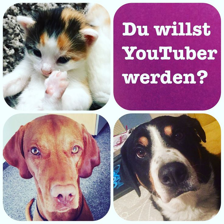 Familypets.de Produkt Highlights