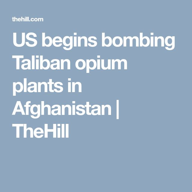 US begins bombing Taliban opium plants in Afghanistan | TheHill