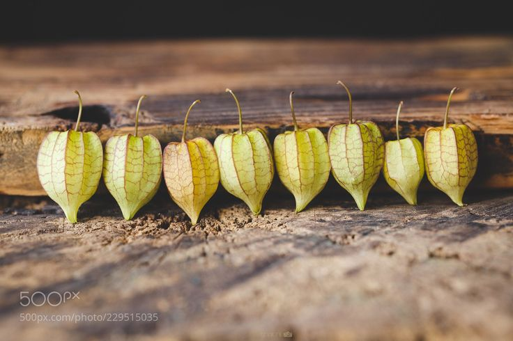Ground Cherries on the old wood (Thai Thu / Ho Chi Minh City / Viet Nam) #NIKON D500 #food #photo #delicious