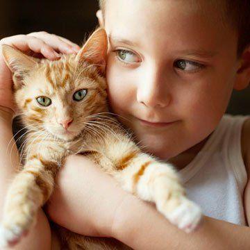Proprietarii de pisici se bucura la ora actuala de o veritabila piata dedicata animalelor lor de companie, de la hrana pentru pisici, pana la servicii veterinare de specialitate. Ba chiar a luat fiinta si o piata a serviciilor de transport pentru animale de companie, lucru de care va puteti convinge foarte usor la o cautare …